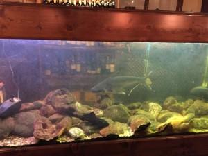 店内にはなぜかサメが泳いでいる水槽が